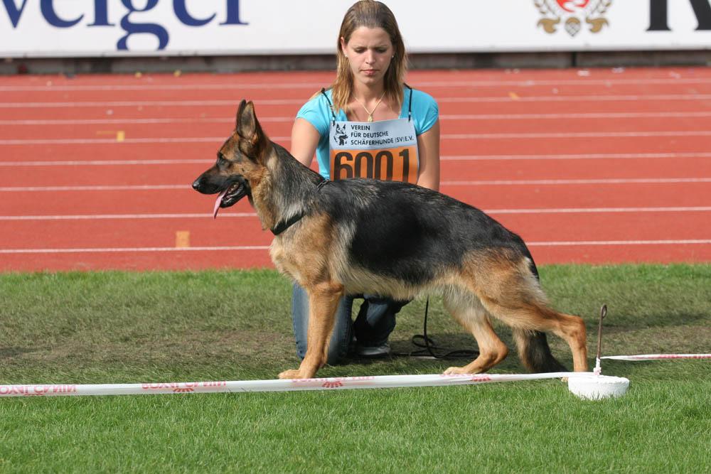 幼年母组前十名 CSV德国牧羊犬俱乐部